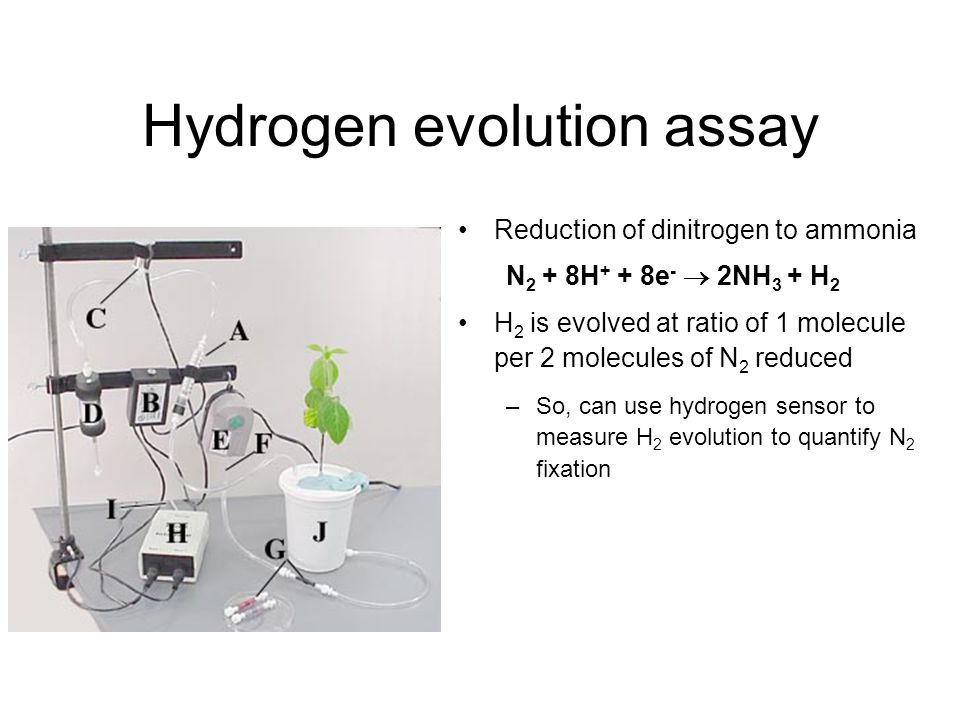Hydrogen evolution assay Reduction of dinitrogen to ammonia N 2 + 8H + + 8e -  2NH 3 + H 2 H 2 is evolved at ratio of 1 molecule per 2 molecules of N 2 reduced –So, can use hydrogen sensor to measure H 2 evolution to quantify N 2 fixation