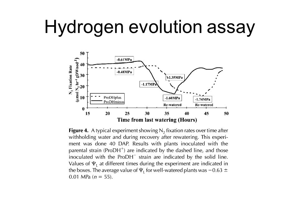 Hydrogen evolution assay