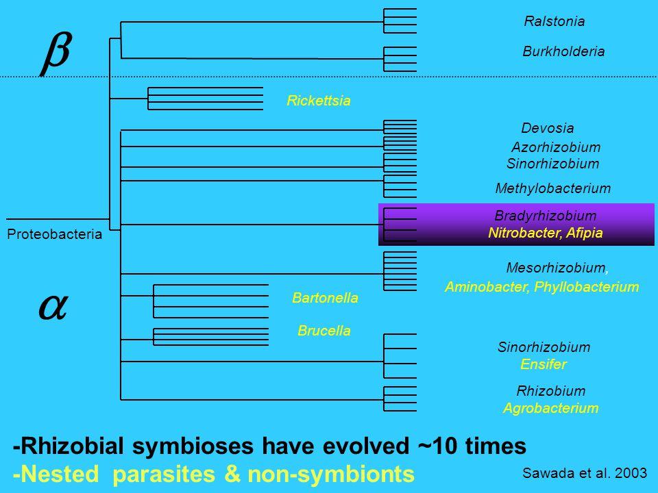 Rhizobium Agrobacterium Sawada et al.