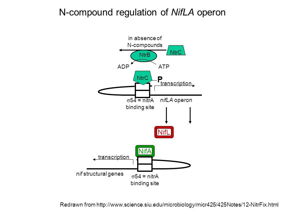 Symbiotic plasmid of Rhizobium etli Víctor González et al. Genome Biology 2003 4(6):R36