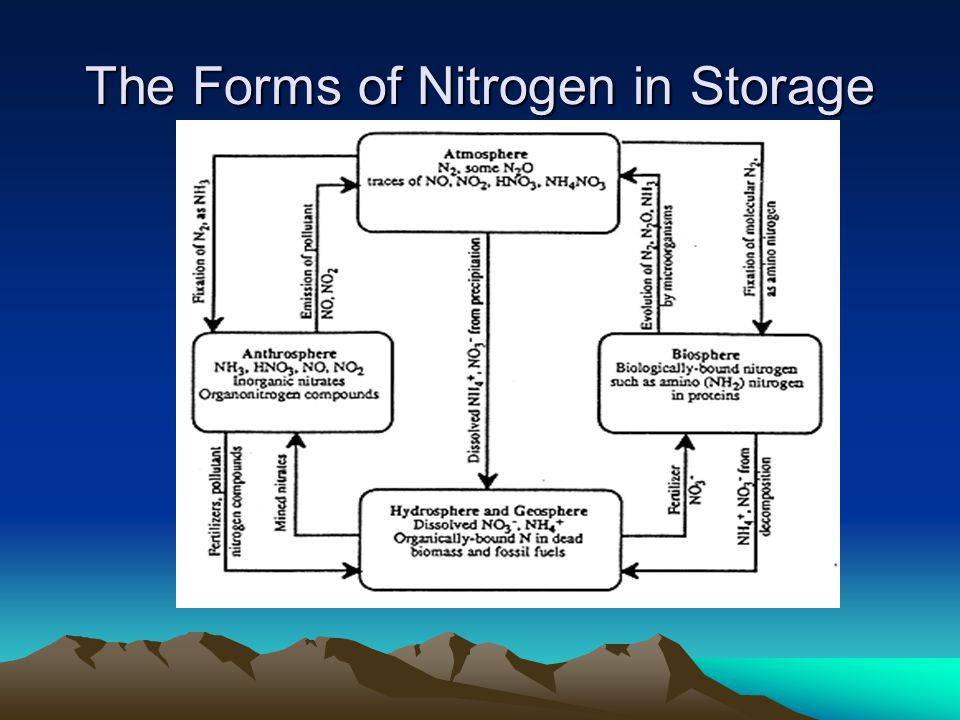The Cycle Abundance is tricky because it is the most limiting nutrient for plant growth Plants take up in the form (s) –NH 4 + ammonium (to much is toxic) –NO 3 - nitrate (soil solutions that are prone to leach)