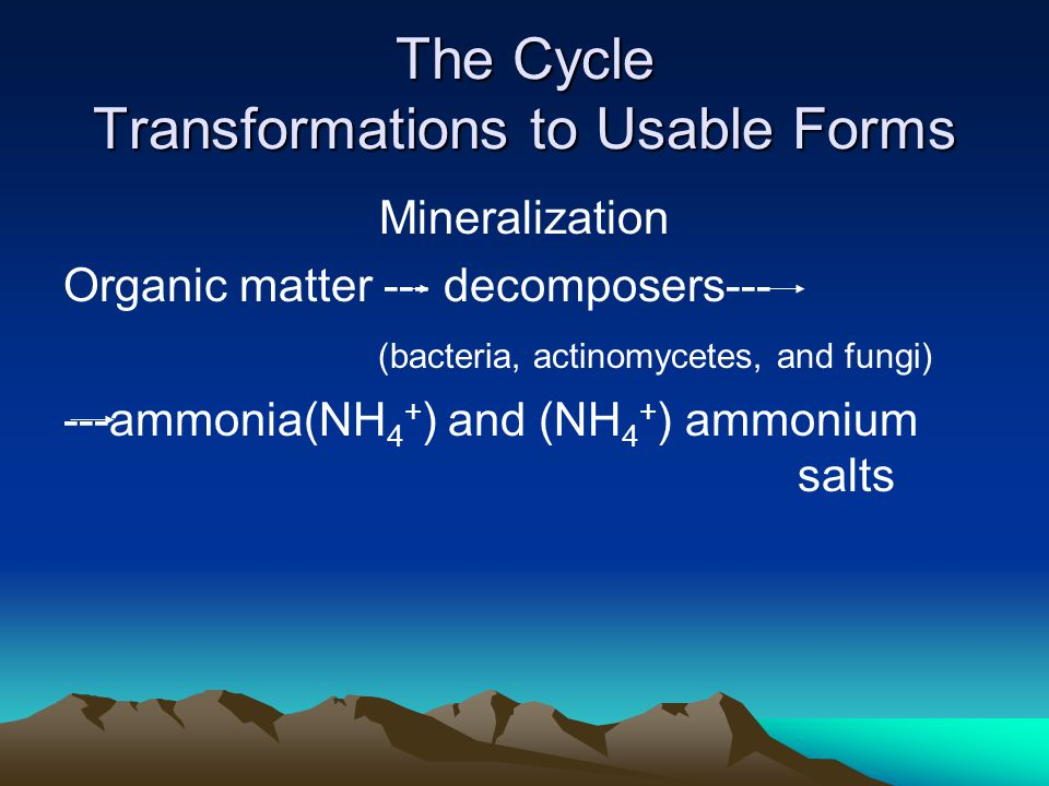 The Cycle Transformations to Usable Forms Mineralization Organic matter --- decomposers--- (bacteria, actinomycetes, and fungi) ---ammonia(NH 4 + ) and (NH 4 + ) ammonium salts