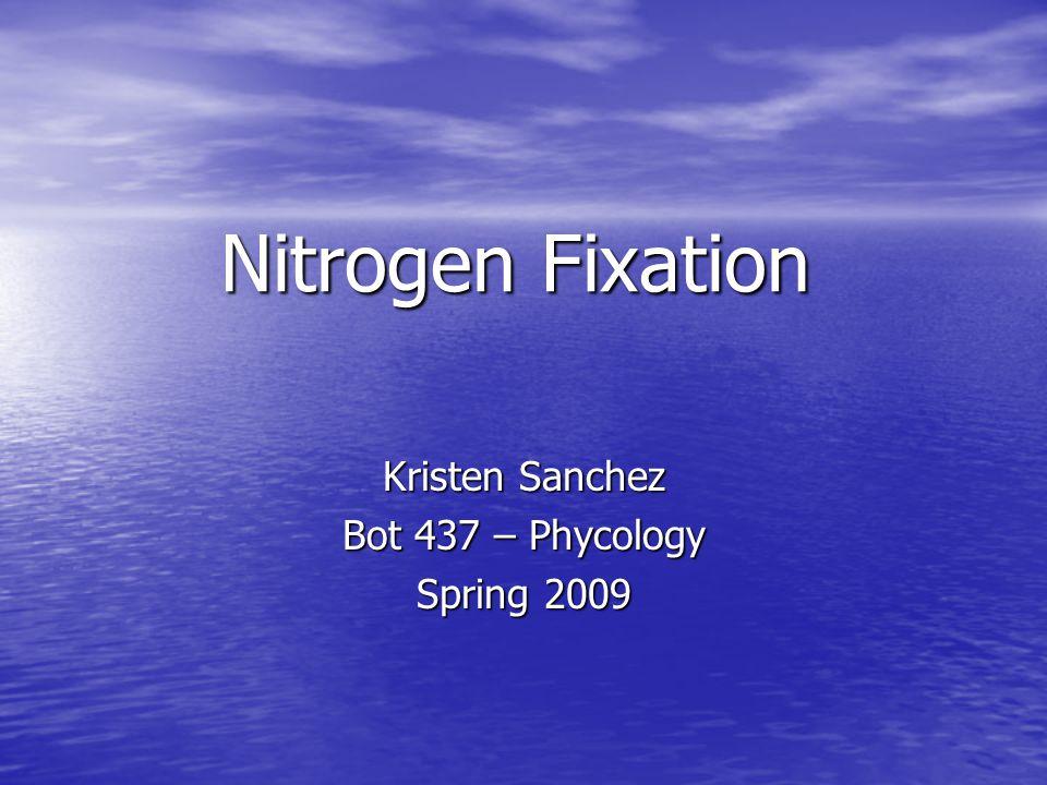 Nitrogen Fixation Kristen Sanchez Bot 437 – Phycology Spring 2009