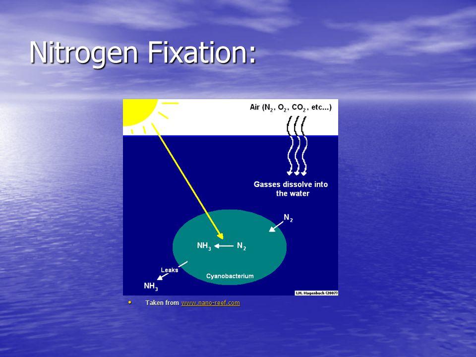 Nitrogen Fixation: Taken from www.nano-reef.com Taken from www.nano-reef.comwww.nano-reef.com