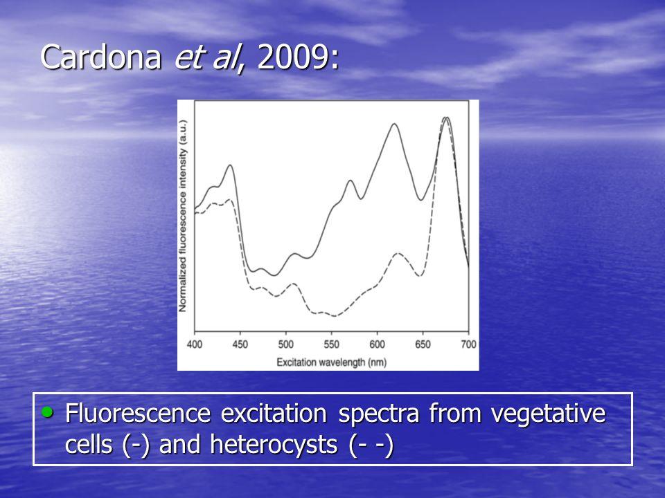 Cardona et al, 2009: Fluorescence excitation spectra from vegetative cells (-) and heterocysts (- -) Fluorescence excitation spectra from vegetative cells (-) and heterocysts (- -)