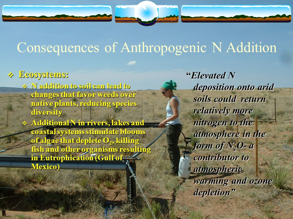 Consequences of Anthropogenic N Addition  Ecosystems:  N addition to soil can lead to changes that favor weeds over native plants, reducing species diversity  Additional N in rivers, lakes and coastal systems stimulate blooms of algae that deplete O 2, killing fish and other organisms resulting in Eutrophication (Gulf of Mexico) Elevated N deposition onto arid soils could return relatively more nitrogen to the atmosphere in the form of N 2 O- a contributor to atmospheric warming and ozone depletion