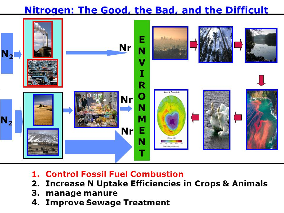 ENVIRONMENTENVIRONMENT Nr Nitrogen: The Good, the Bad, and the Difficult 1.Control Fossil Fuel Combustion 2.Increase N Uptake Efficiencies in Crops & Animals 3.manage manure 4.Improve Sewage Treatment N2N2 N2N2