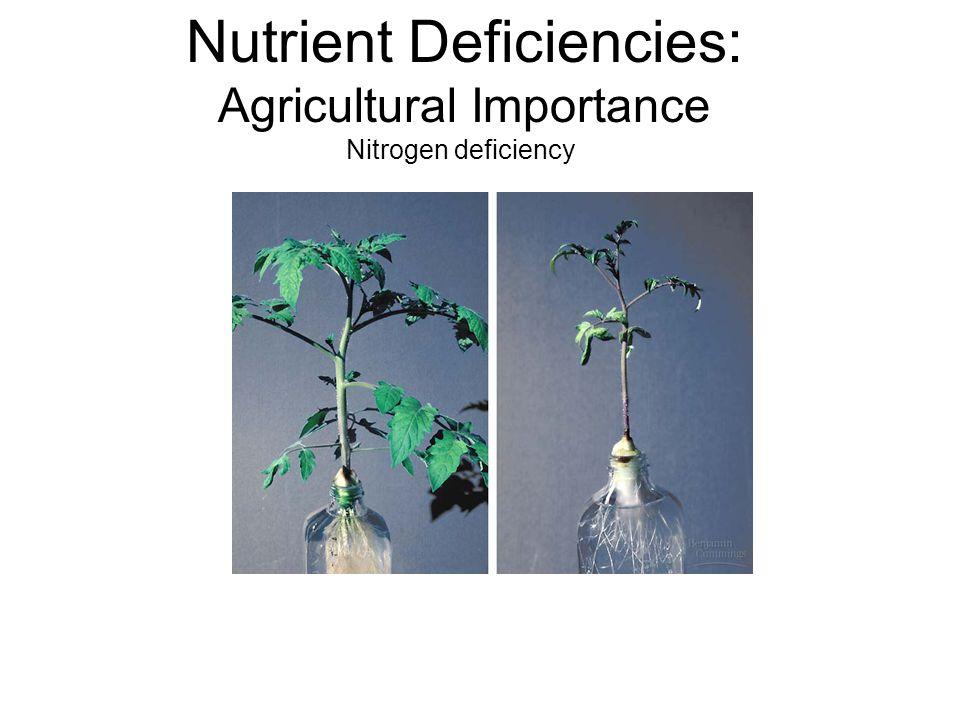 Nutrient Deficiencies: Agricultural Importance Nitrogen deficiency