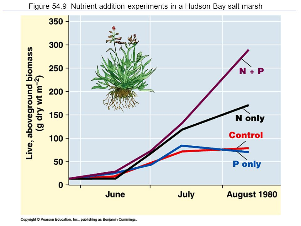Figure 54.9 Nutrient addition experiments in a Hudson Bay salt marsh