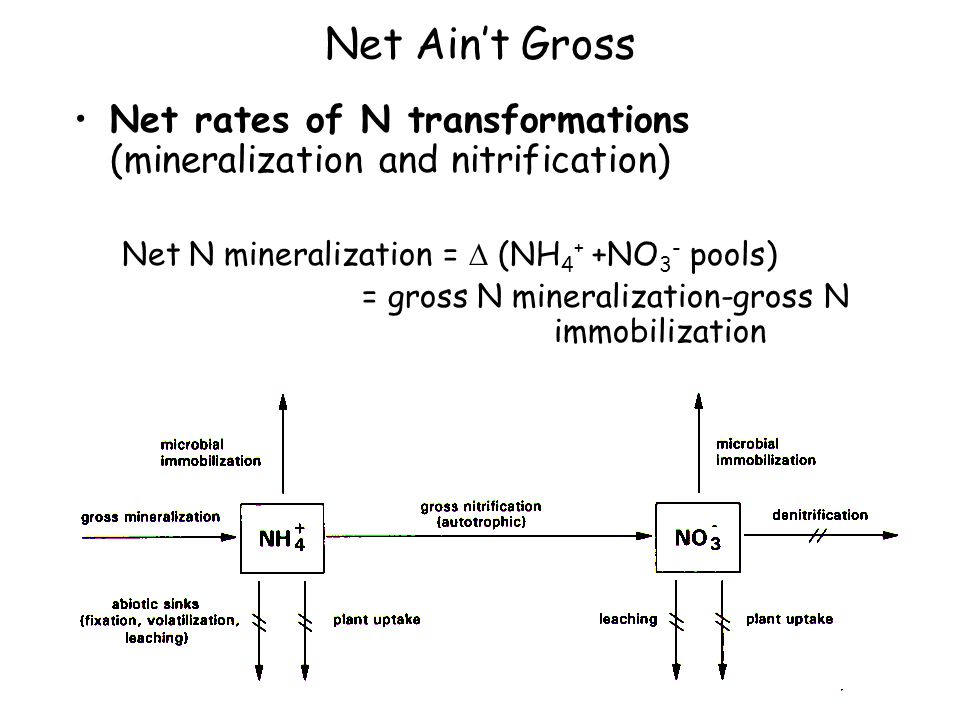 Net Ain't Gross Net rates of N transformations (mineralization and nitrification) Net N mineralization =  (NH 4 + +NO 3 - pools) = gross N mineraliza