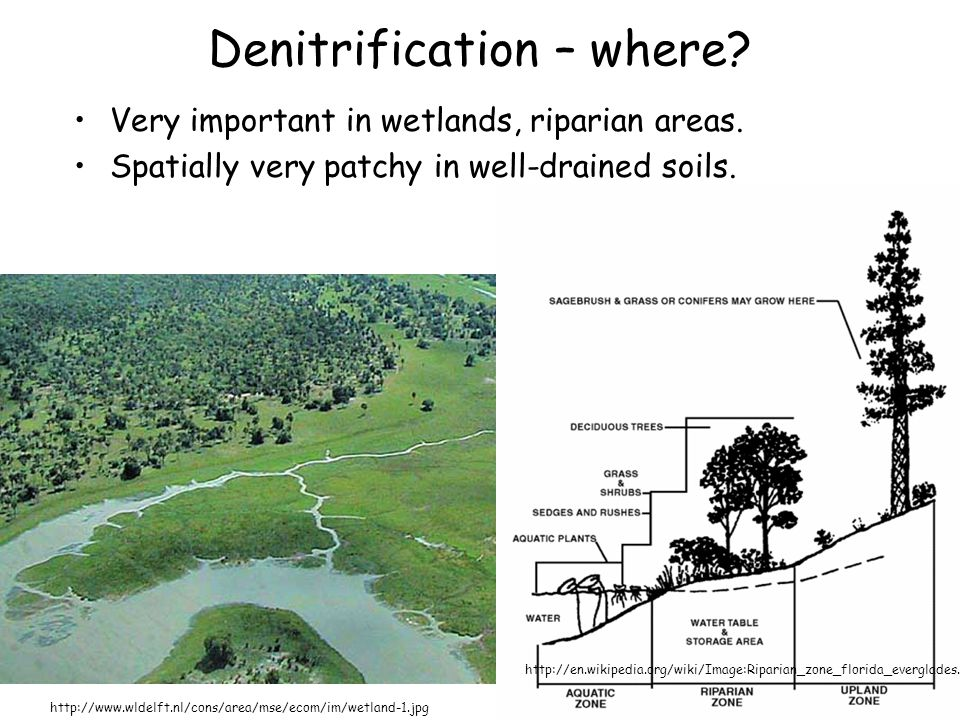 Denitrification – where? Very important in wetlands, riparian areas. Spatially very patchy in well-drained soils. http://www.wldelft.nl/cons/area/mse/