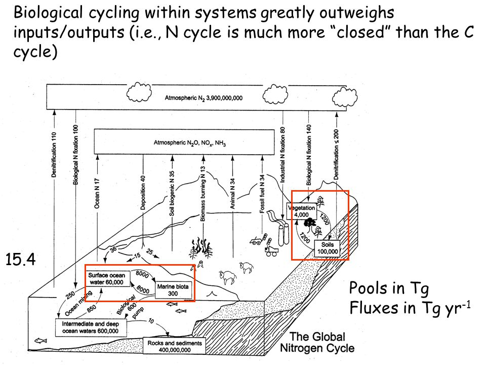 "Pools in Tg Fluxes in Tg yr -1 15.4 Biological cycling within systems greatly outweighs inputs/outputs (i.e., N cycle is much more ""closed"" than the C"
