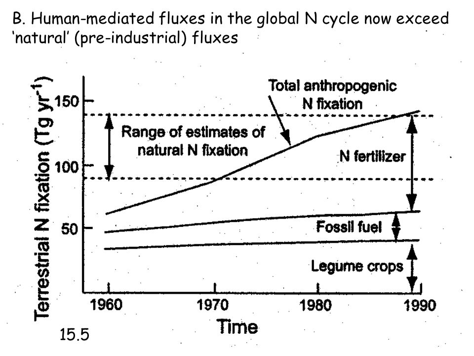 B. Human-mediated fluxes in the global N cycle now exceed 'natural' (pre-industrial) fluxes 15.5