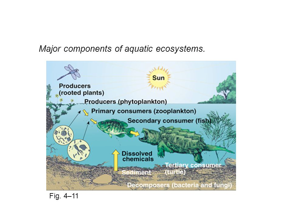 Major components of aquatic ecosystems. Fig. 4–11