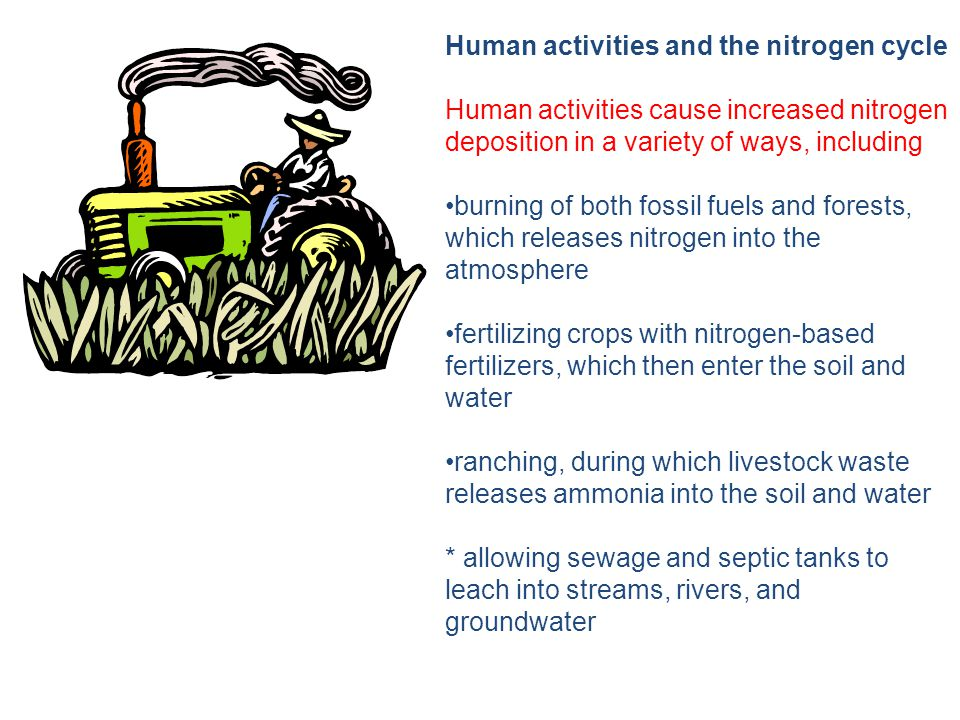 Human activities and the nitrogen cycle Human activities cause increased nitrogen deposition in a variety of ways, including burning of both fossil fuels and forests, which releases nitrogen into the atmosphere fertilizing crops with nitrogen-based fertilizers, which then enter the soil and water ranching, during which livestock waste releases ammonia into the soil and water * allowing sewage and septic tanks to leach into streams, rivers, and groundwater