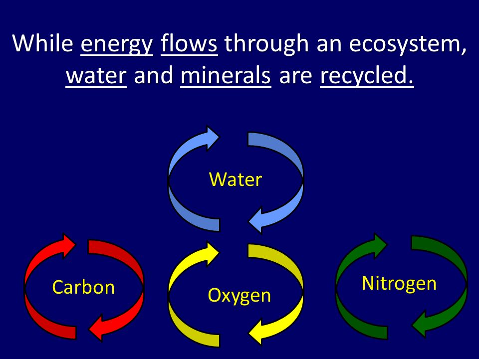 While energy flows through an ecosystem, water and minerals are recycled.