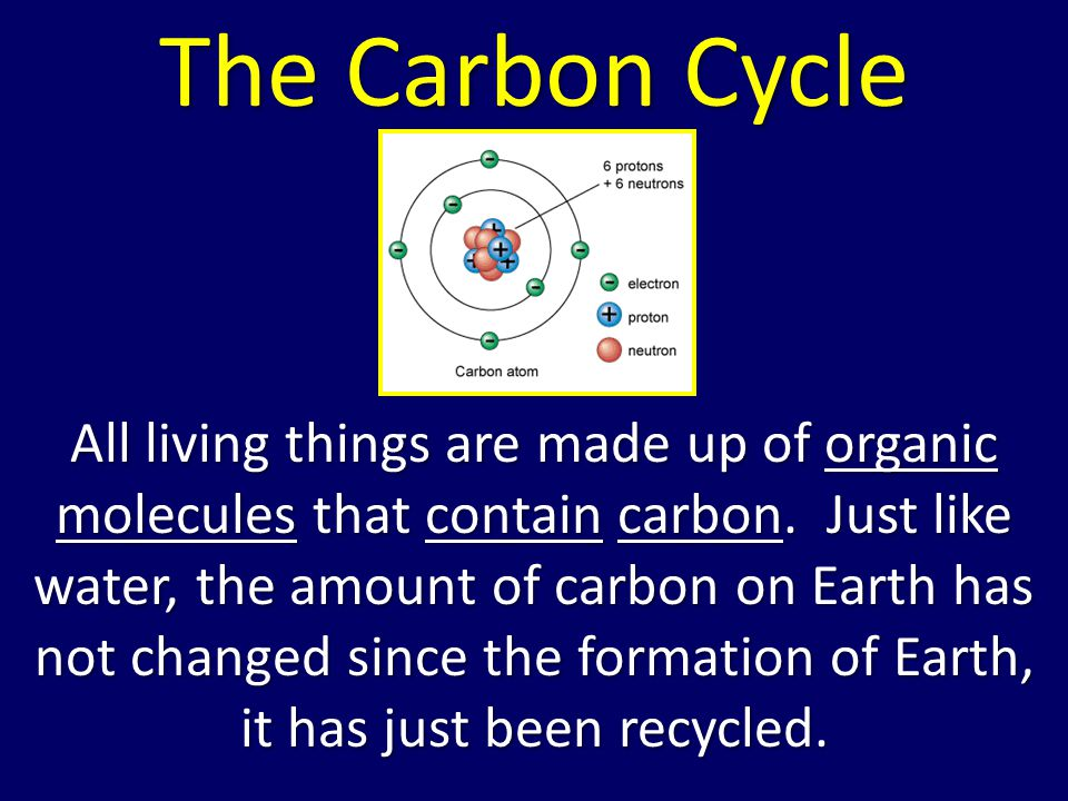 The Carbon Cycle All living things are made up of organic molecules that contain carbon.