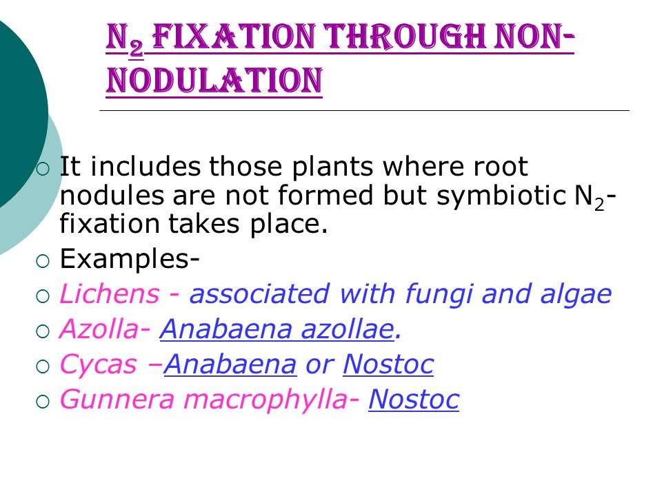 N 2 Fixation through Non- nodulation  It includes those plants where root nodules are not formed but symbiotic N 2 - fixation takes place.  Examples
