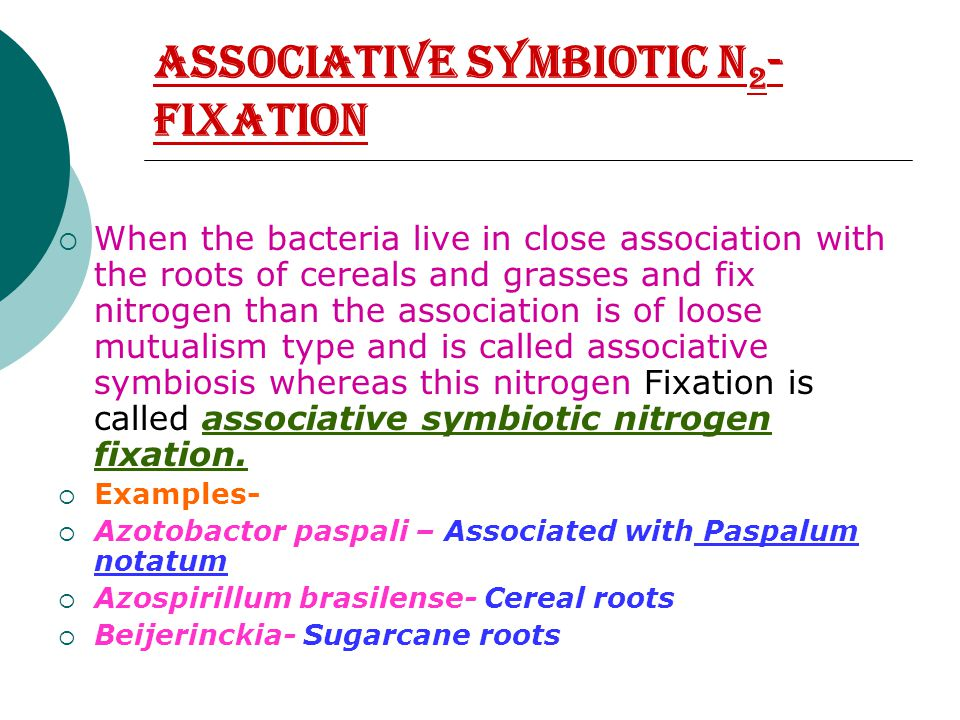 Associative Symbiotic N 2 - Fixation  When the bacteria live in close association with the roots of cereals and grasses and fix nitrogen than the association is of loose mutualism type and is called associative symbiosis whereas this nitrogen Fixation is called associative symbiotic nitrogen fixation.