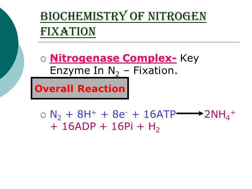 BIOCHEMISTRY OF NITROGEN FIXATION  Nitrogenase Complex- Key Enzyme In N 2 – Fixation.