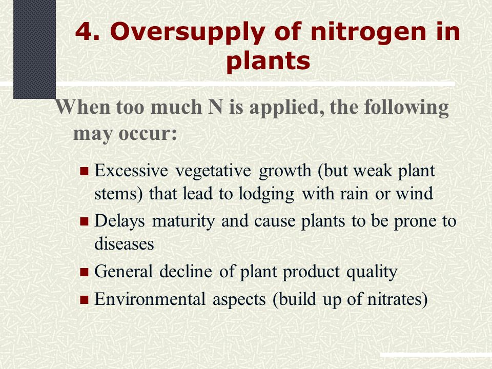 When too much N is applied, the following may occur: Excessive vegetative growth (but weak plant stems) that lead to lodging with rain or wind Delays maturity and cause plants to be prone to diseases General decline of plant product quality Environmental aspects (build up of nitrates) 4.