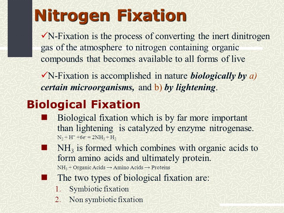 Nitrogen Fixation Biological Fixation Biological fixation which is by far more important than lightening is catalyzed by enzyme nitrogenase.