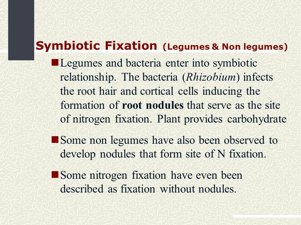 Symbiotic Fixation (Legumes & Non legumes) Legumes and bacteria enter into symbiotic relationship.
