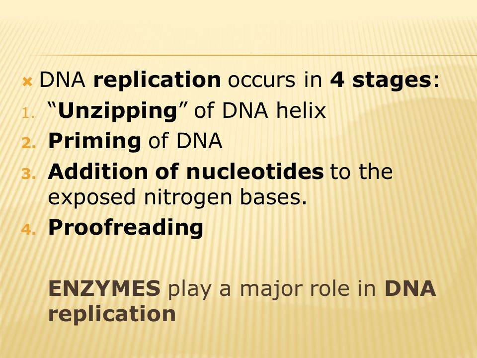 " DNA replication occurs in 4 stages: 1. ""Unzipping"" of DNA helix 2. Priming of DNA 3. Addition of nucleotides to the exposed nitrogen bases. 4. Proof"