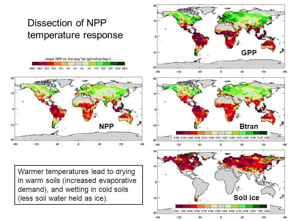 Dissection of NPP temperature response GPP Soil ice BtranNPP Warmer temperatures lead to drying in warm soils (increased evaporative demand), and wetting in cold soils (less soil water held as ice).