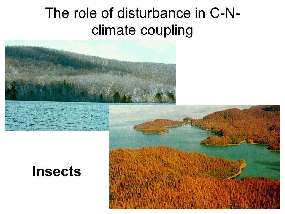 The role of disturbance in C-N- climate coupling Insects