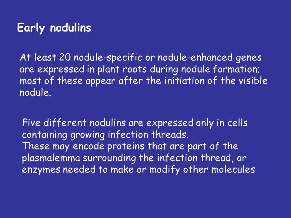 Nodulins Bacterial attachment Root hair invasion Bacteroid development Nitrogen fixation Nodule senescence early nodulins late nodulins Nodulins? Pre-