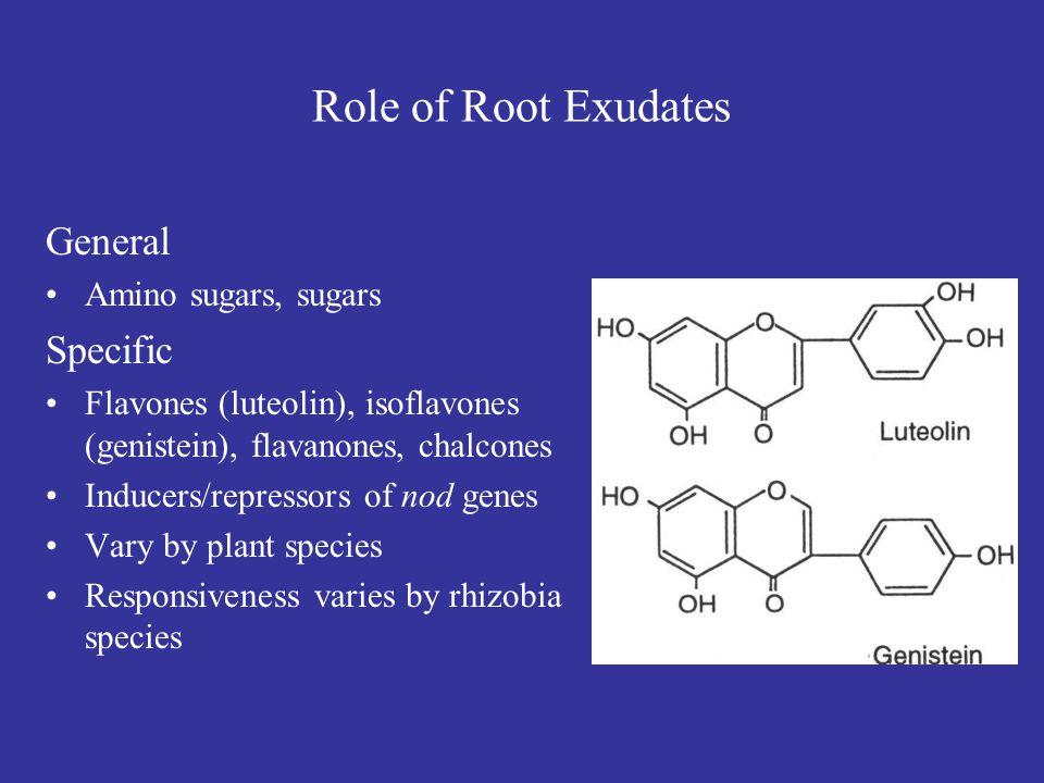Nodulation in Legumes