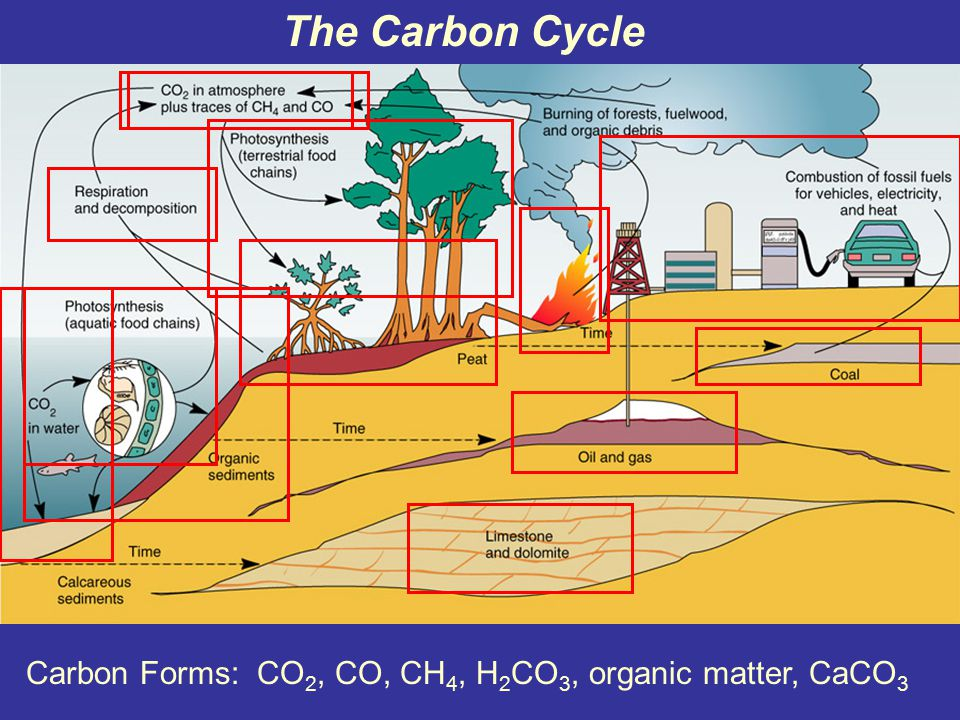 Let's consider four biogeochemical cycles of elements required by organisms for life Carbon Phosphorus Sulphur Nitrogen