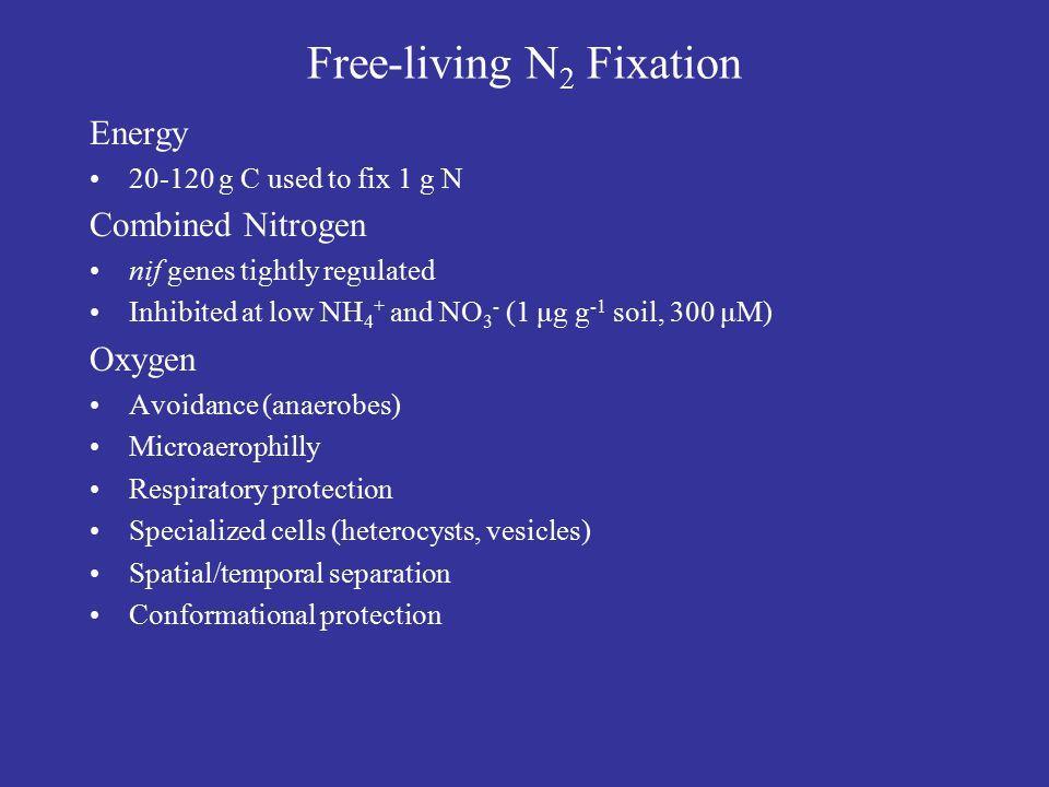 Types of Biological Nitrogen Fixation Free-living (asymbiotic) Cyanobacteria Azotobacter Associative Rhizosphere–Azospirillum Lichens–cyanobacteria Le