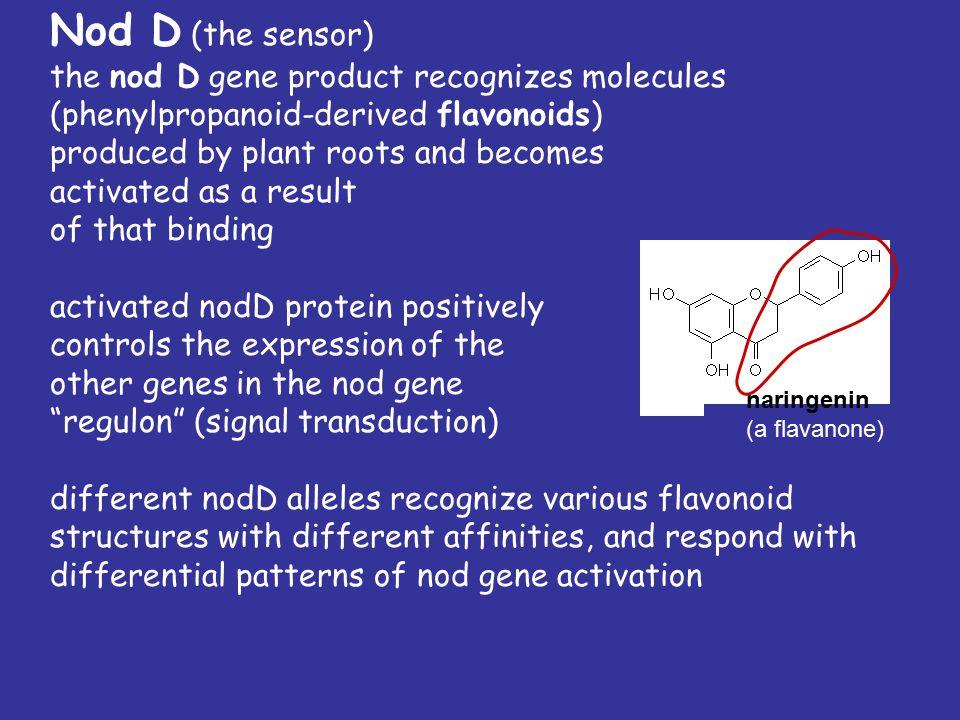 F G H I N D 1 A B C I J Q P G E F H D 3 E K D H A B C (nol)(nod)(nif) (fix) Gene clusters on R.