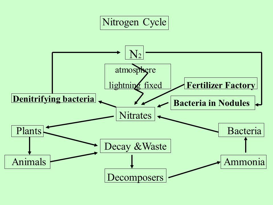 Nitrogen Cycle N2N2 atmosphere lightning fixedFertilizer Factory Denitrifying bacteria Nitrates PlantsBacteria Decay &Waste AnimalsAmmonia Decomposers