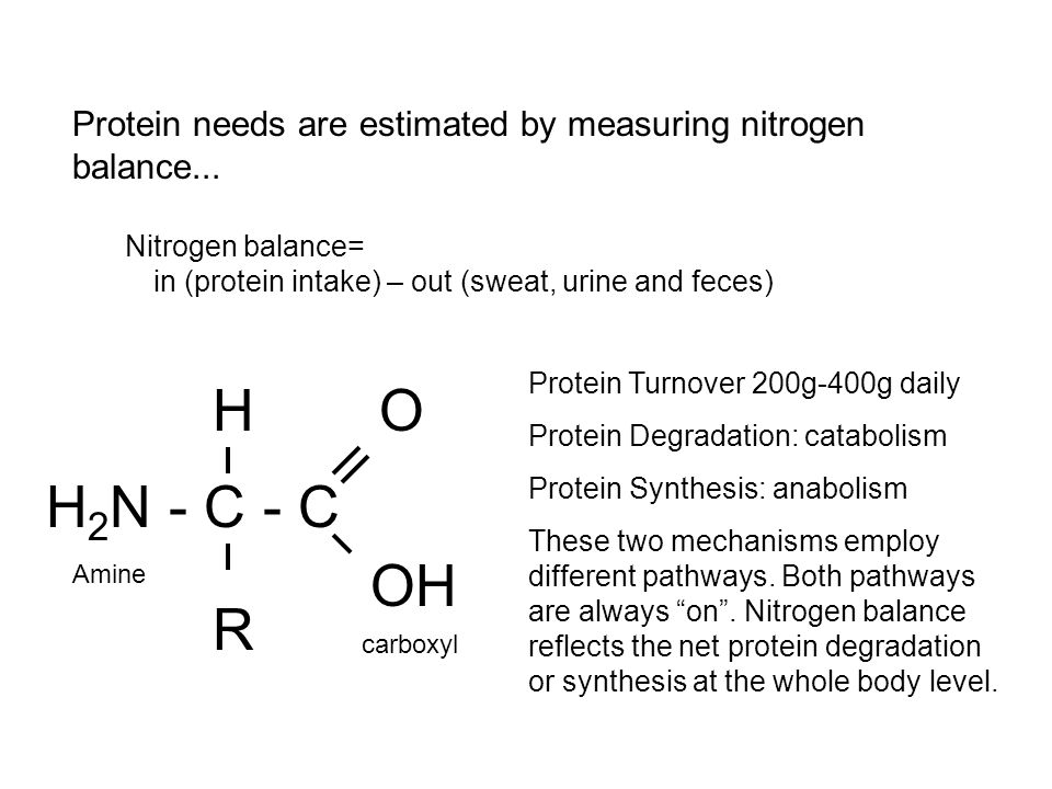 H 2 N - C - C H OH O R Amine carboxyl Protein needs are estimated by measuring nitrogen balance...