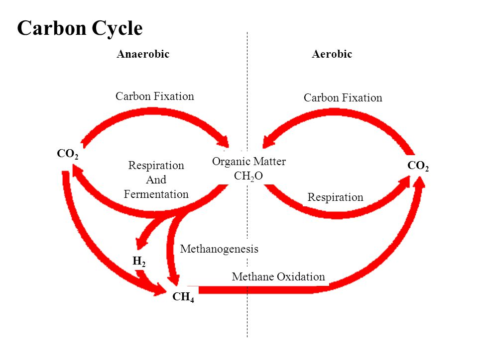 Carbon Cycle AnaerobicAerobic Carbon Fixation CO 2 Respiration And Fermentation Organic Matter CH 2 O Respiration CO 2 Methane Oxidation Methanogenesis H2H2 CH 4