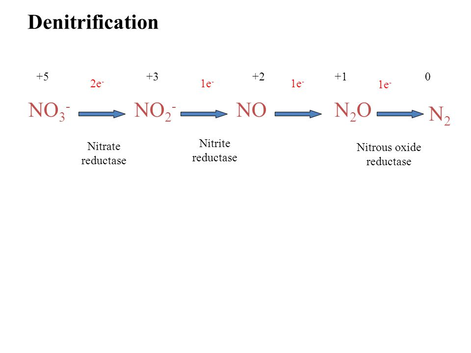 NO 2 - NON2ON2O N2N2 Denitrification Nitrate reductase Nitrite reductase Nitrous oxide reductase +5+3+2+10 2e - 1e -