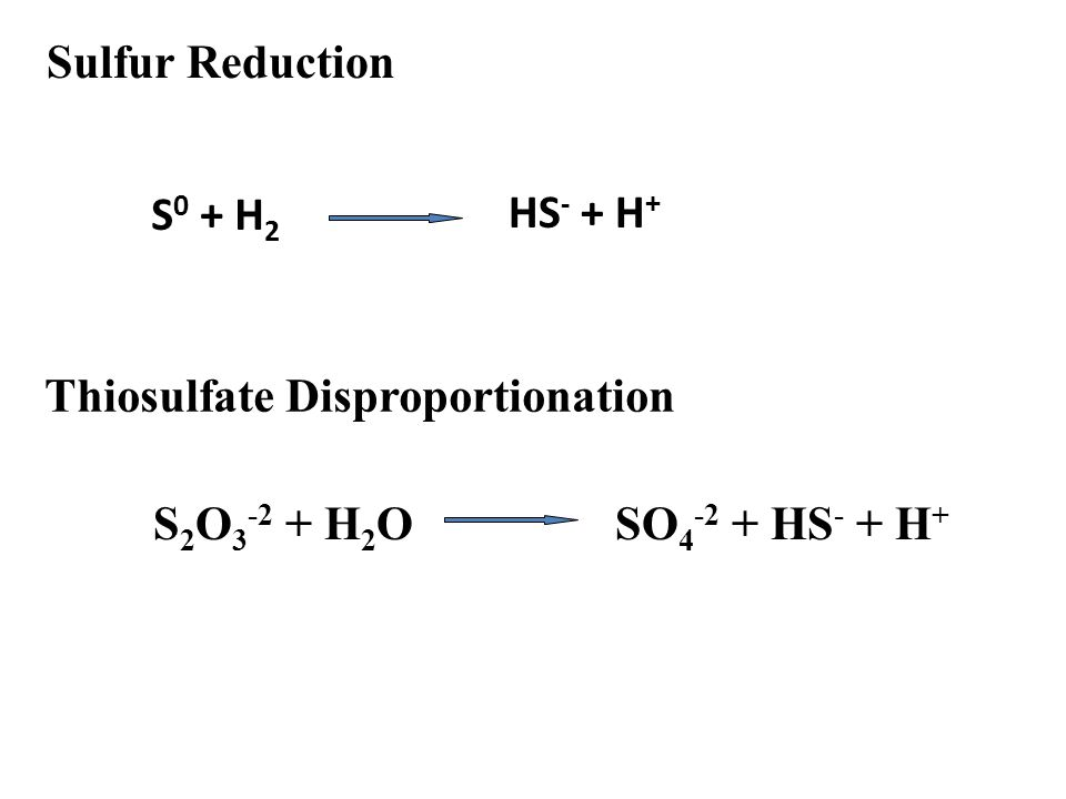 Sulfur Reduction Thiosulfate Disproportionation S 2 O 3 -2 + H 2 OSO 4 -2 + HS - + H + S 0 + H 2 HS - + H +
