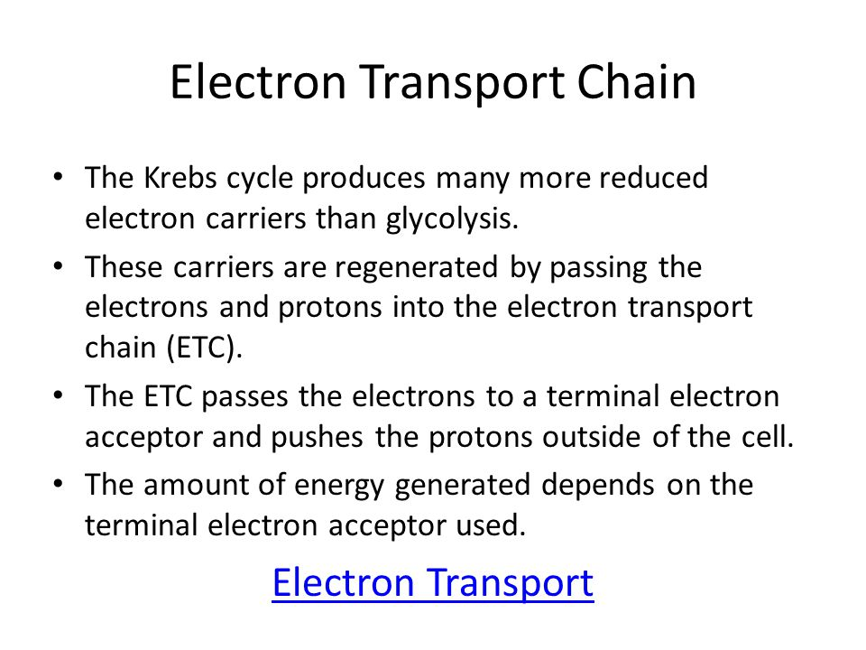 Electron Transport Chain The Krebs cycle produces many more reduced electron carriers than glycolysis.