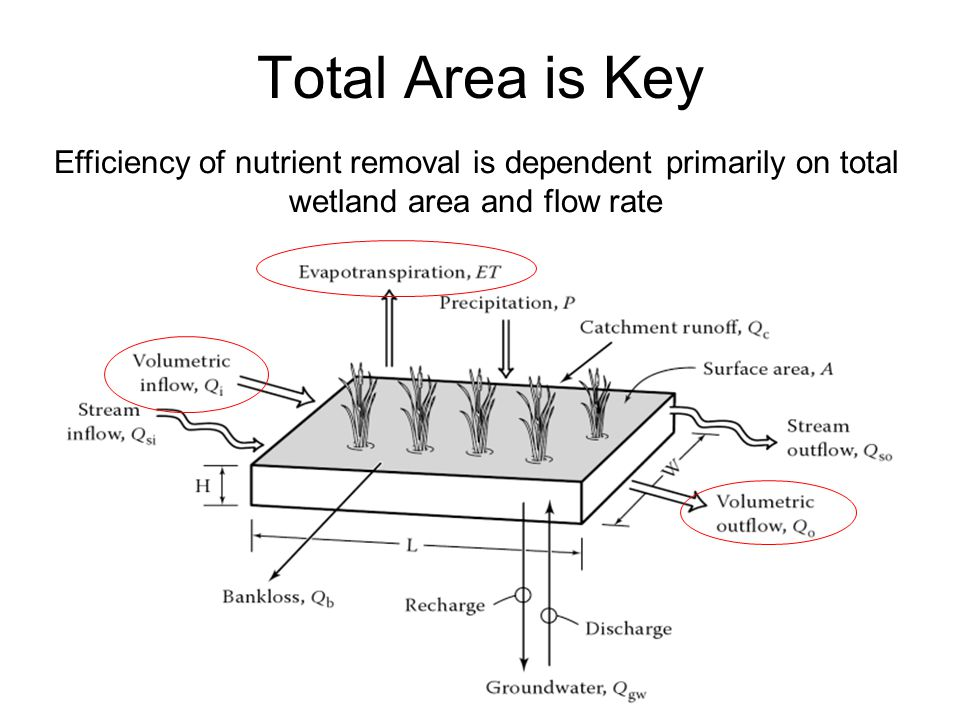 Efficiency of nutrient removal is dependent primarily on total wetland area and flow rate Total Area is Key