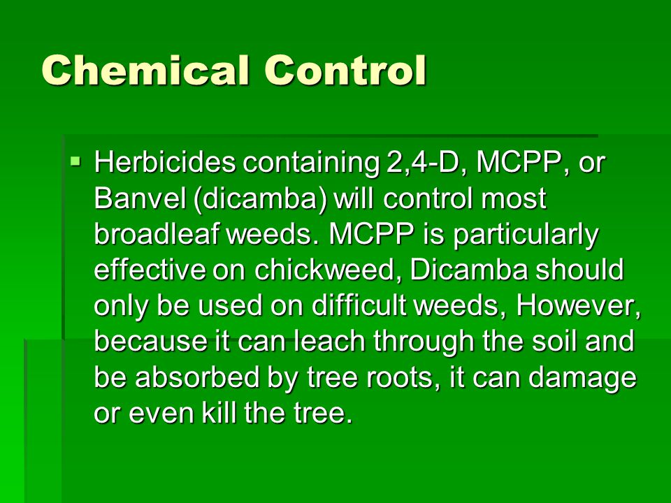 Chemical Control  Herbicides containing 2,4-D, MCPP, or Banvel (dicamba) will control most broadleaf weeds.