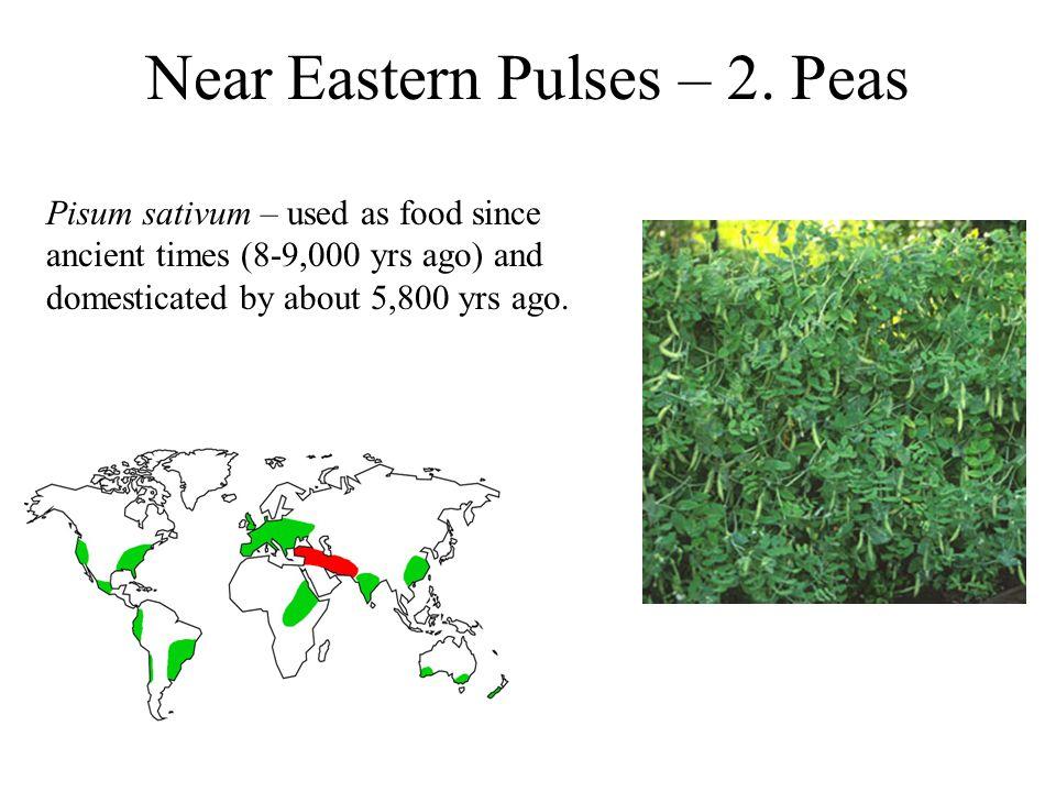 Near Eastern Pulses – 2.