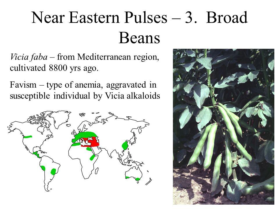 Near Eastern Pulses – 3.