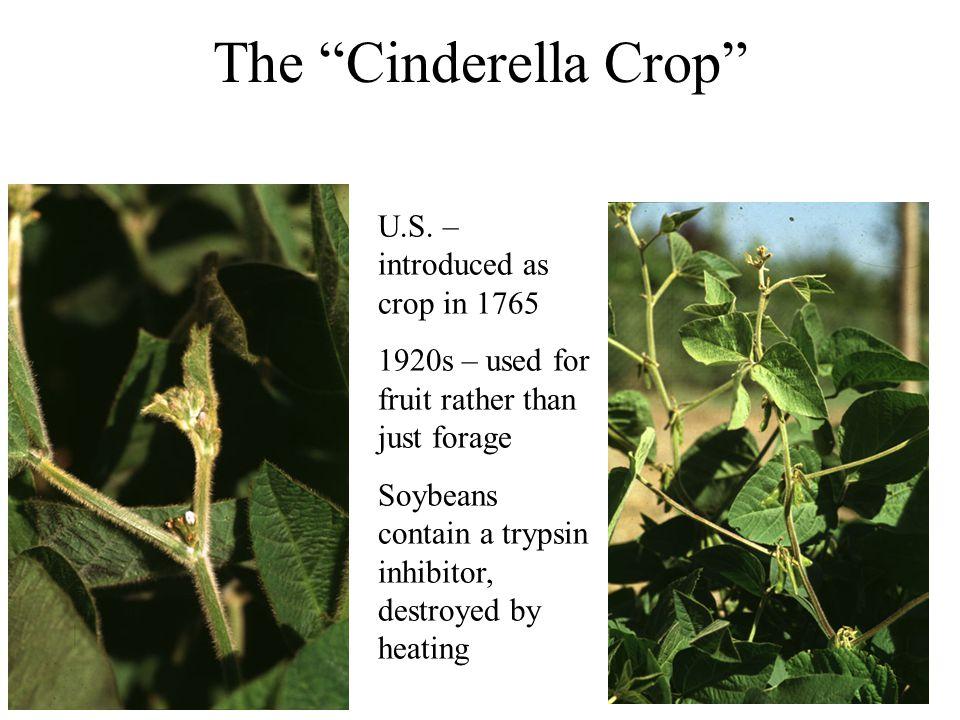 The Cinderella Crop U.S.