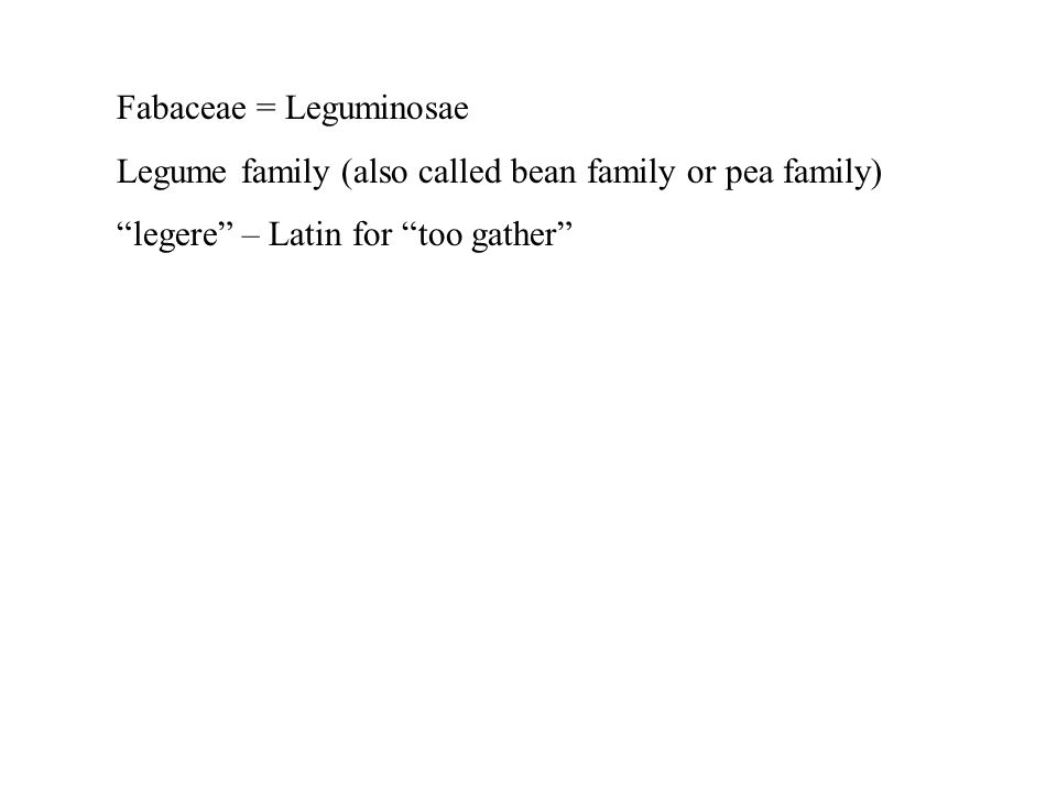 Fabaceae = Leguminosae Legume family (also called bean family or pea family) legere – Latin for too gather
