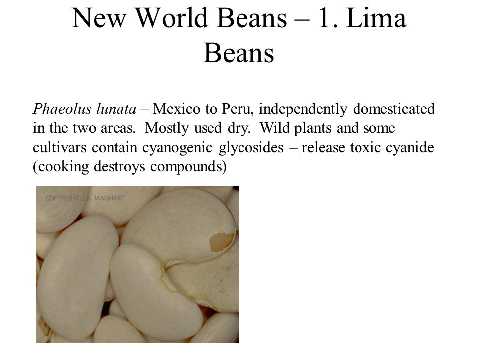 New World Beans – 1.