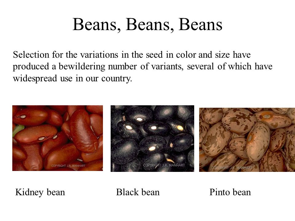 Beans, Beans, Beans Selection for the variations in the seed in color and size have produced a bewildering number of variants, several of which have widespread use in our country.