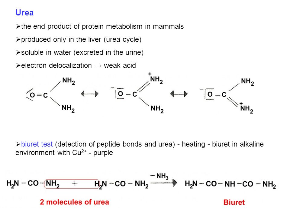 Fate of amino acid nitrogen = urea synthesis: Urea nitrogen from:1. NH 4 + 2. aspartate